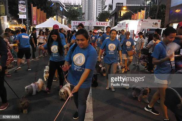Shih Tzu dogs are now dragging their owners on the walk The Great Shih Tzu Walk is an event organized by Royal Canin Philippines in an attempt to...