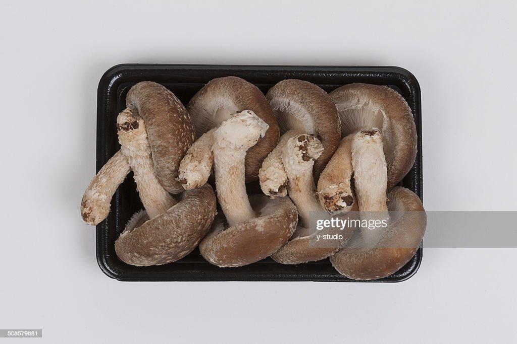 Shiitake mushroom : Stockfoto