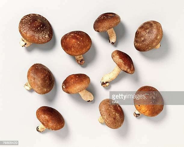 shiitake mushrooms, high angle view - shiitake mushroom stock pictures, royalty-free photos & images