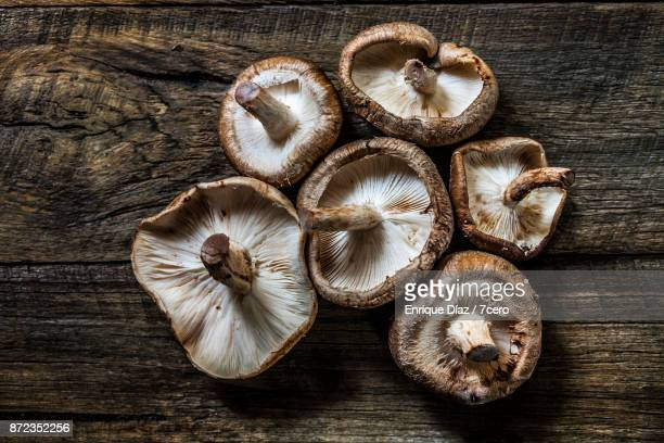 shiitake still life - edible mushroom stock pictures, royalty-free photos & images