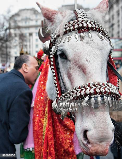 Shiite Muslim devotee pays respects to a horse representing Imam Husain horse Zuljina during the 29th Arbaeen Procession on February 7 2010 in London...