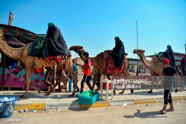 Shiite Muslim pilgrims travel on camels as they take part in a procession from the holy Iraqi city of Najaf towards the central shrine city of...