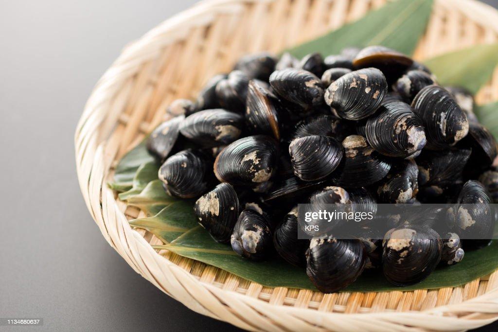 Shijimi clam. : Stock Photo