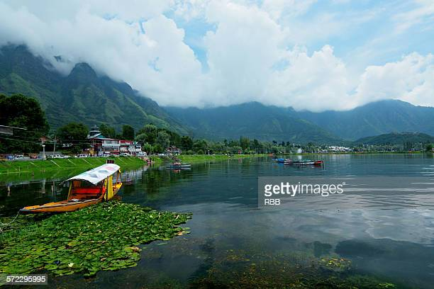 shikara boat in dal lake - kashmir valley stock photos and pictures