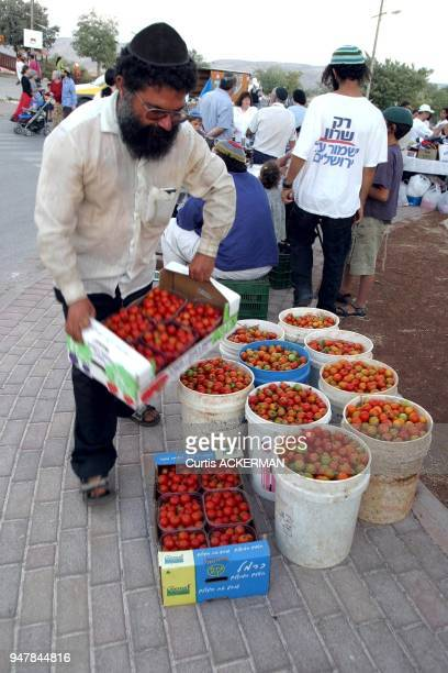 Shilo farmer sells his tomatoes during a community event Shilo is a large West Bank settlement located north of Jerusalem was once a capital of the...