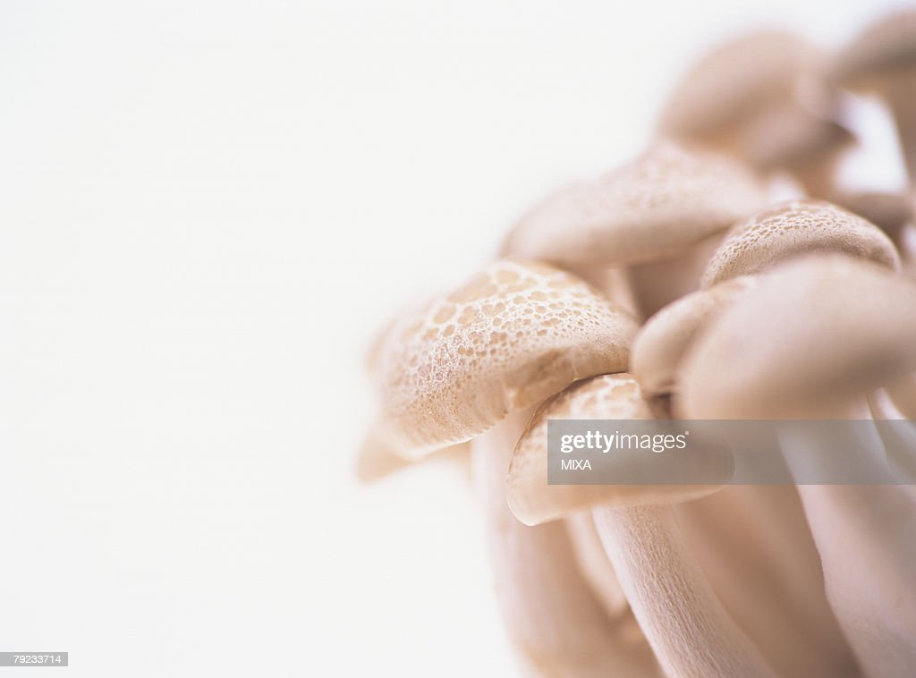 Shimeji Mushroom, close-up : Stock Photo