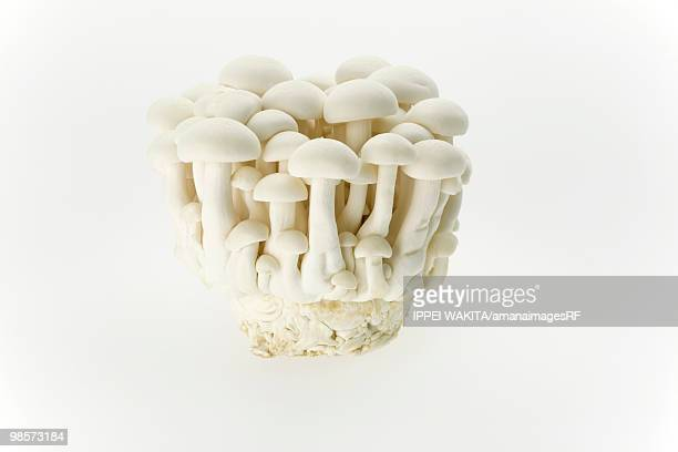 shimeji mushroom - shimeji mushroom stock pictures, royalty-free photos & images