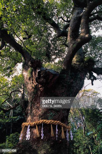 Shimenawa rice straw rope tied around a sacred tree Atsuta Shrine Nagoya Japan