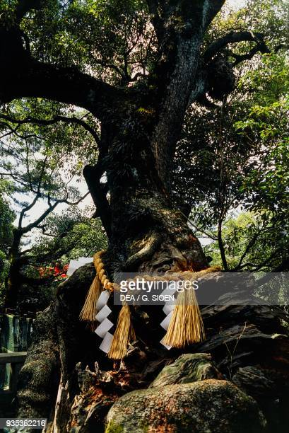 Shimenawa rice straw rope tied around a sacred tree Sumiyoshi Taisha shrine Osaka Kansai Japan