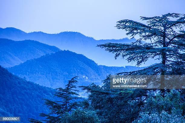 shimla landscape - shimla stock pictures, royalty-free photos & images