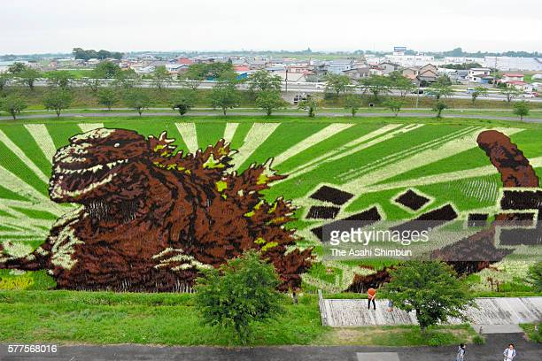 Shin Godzilla or Godzilla Resurgence is displayed on a rice paddy on July 17 2016 in Inakadate Akita Japan