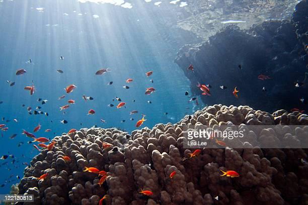 shine of jackson reef - sharm el sheikh foto e immagini stock