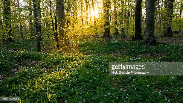 shine - forest stockfoto's en -beelden