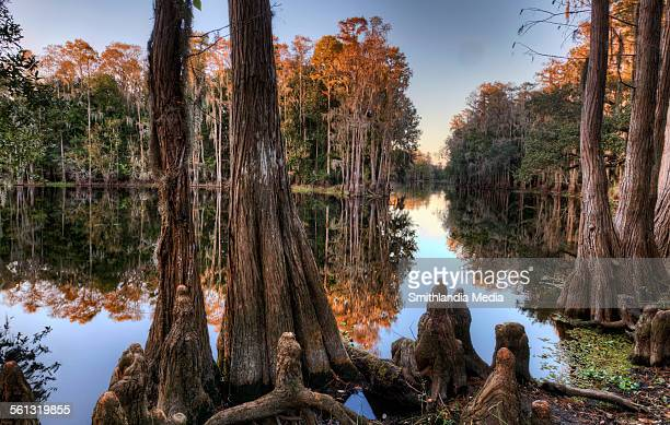 Shingle Creek Reflections