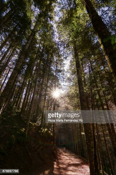 Shining sun between the trees in forest with pedestrian at background.