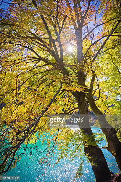 sol brilhando através da árvore de outono - copa - fotografias e filmes do acervo