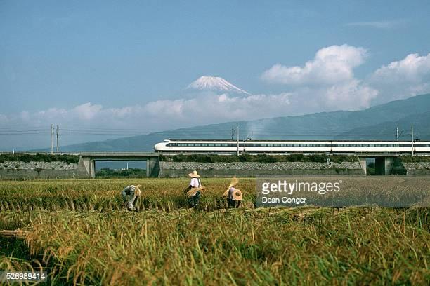 Shinkansen Train Passing Rice Field