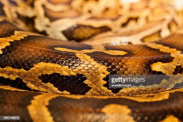 Shiny Skin Of a Snake