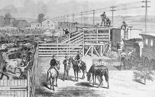 Shipping Cattle On Board A Train From A Corral At Halleck Across the continent the Frank Leslie Transcontinental ExcursionScenes and incidents on the...