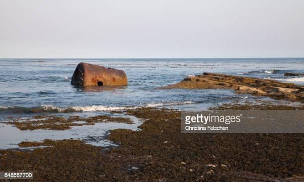 shipwreck on the beach of the west coast trail, canada - christina felschen - fotografias e filmes do acervo