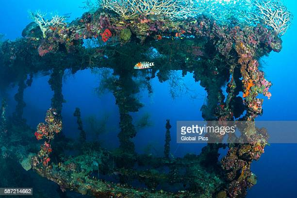 shipwreck - palau, micronesia - sunken stock pictures, royalty-free photos & images
