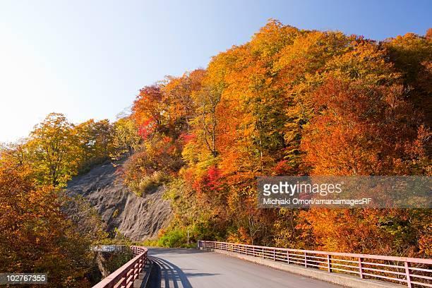 Shirakami mountain range in autumn. Aomori Prefecture, Japan