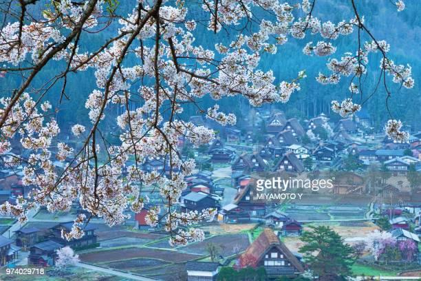shirakawa-go in sakura - miyamoto y ストックフォトと画像
