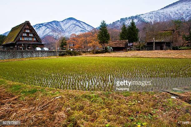 shirakawago's autumn - 山村 ストックフォトと画像