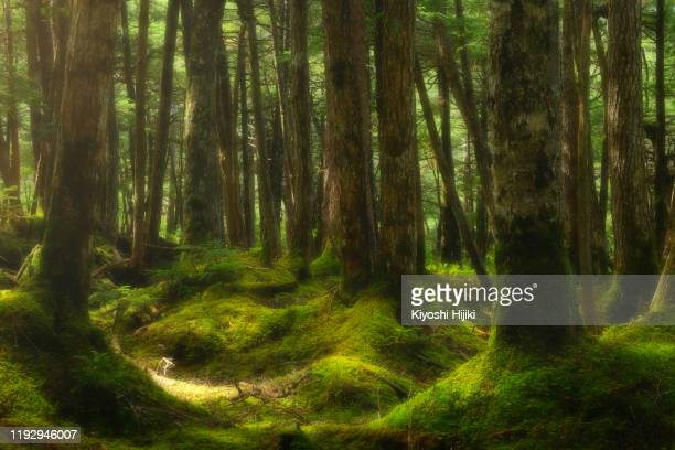 shirakoma moss forest - foresta temperata foto e immagini stock