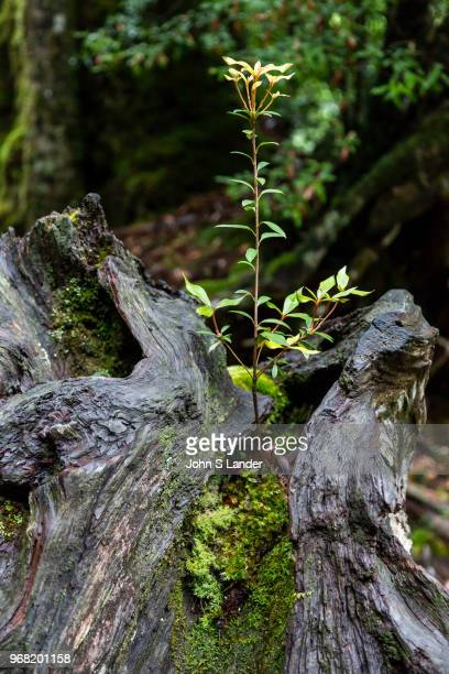Shiratani Unsuikyo Ravine is a lush nature park containing many of Yakushima's ancient cedars. This nature reserve offers a network of hiking trails...