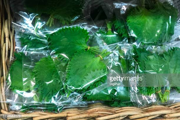shiso leaves packed in plastic bags at market in yokohama - shiso stock pictures, royalty-free photos & images