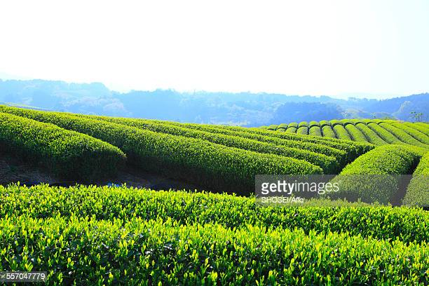 shizuoka prefecture, japan - shizuoka stock pictures, royalty-free photos & images