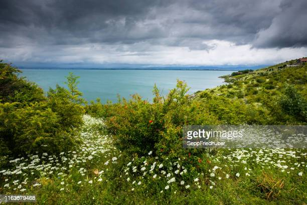 shkodra lake albania montenegro - tourismus stock pictures, royalty-free photos & images