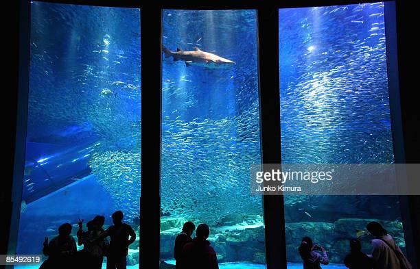 Shoal of sardines and sharks swim in the new tank at Yokohama Hakkeijima Sea Paradise on March 19 2009 in Yokohama Japan The display starts as a part...