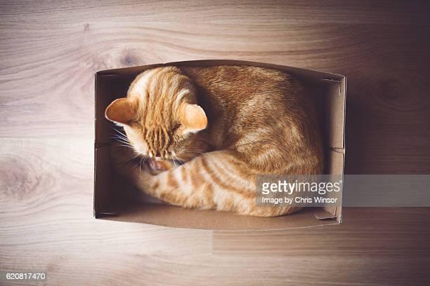 Shoe box cat