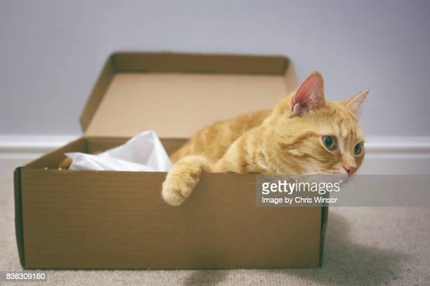 Shoebox cat