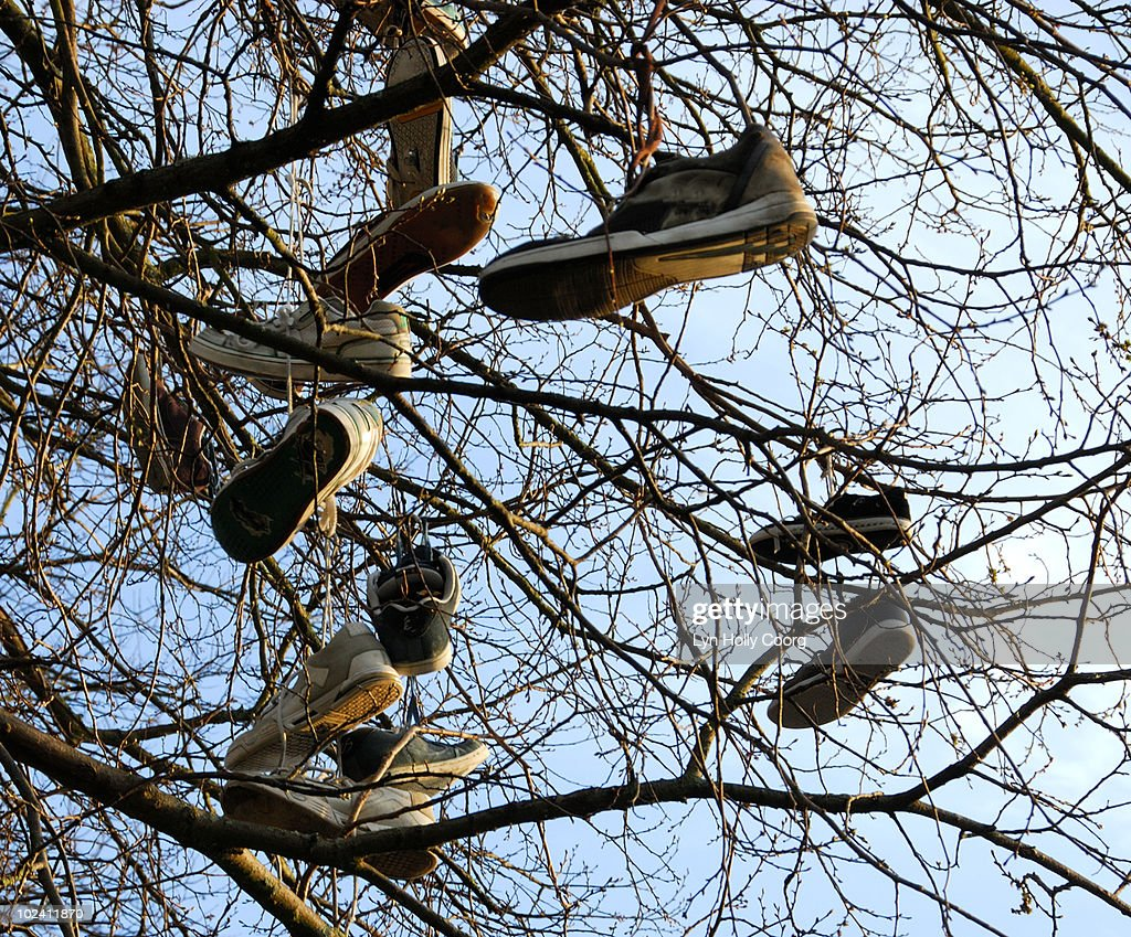 Shoes hanging in tree : Stock Photo