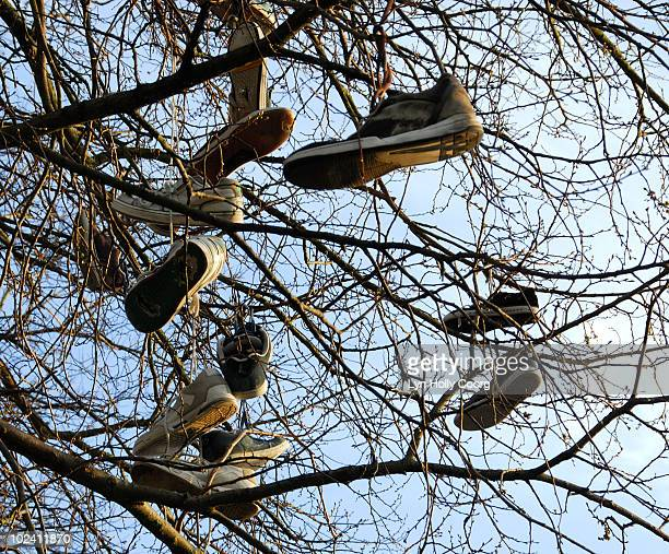 shoes hanging in tree - lyn holly coorg stock pictures, royalty-free photos & images