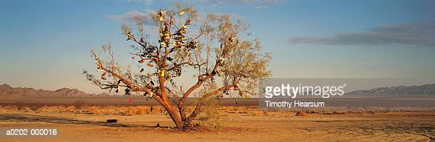 shoes hanging on desert tree - timothy hearsum stock pictures, royalty-free photos & images