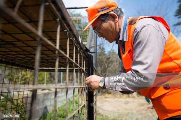 Shoichiro Sakamoto head of Tomioka Town's animal control hunters group prepares a booby trap for wild boars at a residential area in an evacuation...