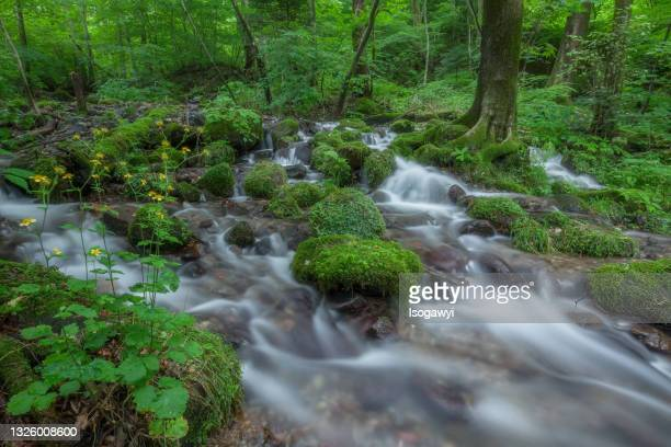 shojinzawa, clear spring water stream - isogawyi - fotografias e filmes do acervo