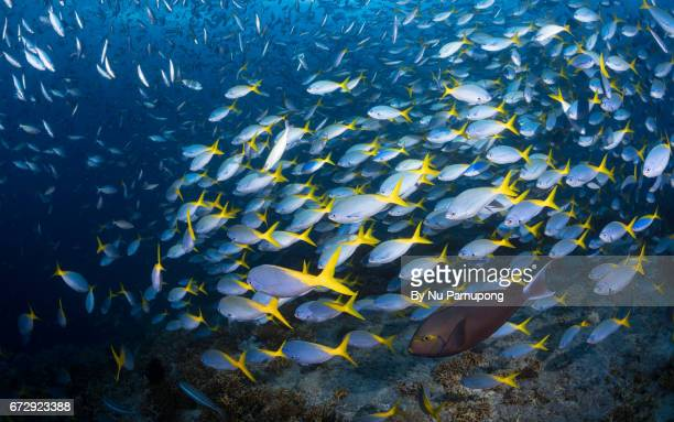 Shooling fish on the reef in Raja Ampat