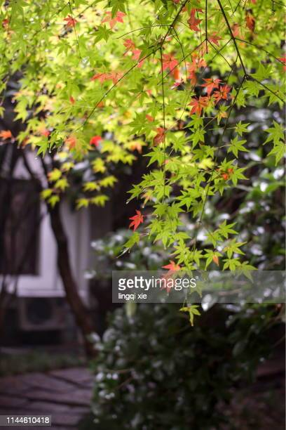 shoot leaves with a large aperture - 九月 ストックフォトと画像