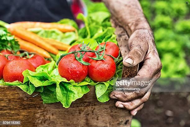 Atirar de mãos segurando uma grelha com os produtos hortícolas