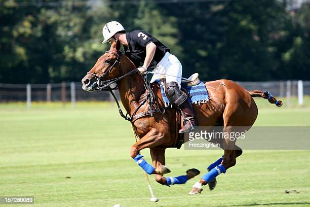 shoot the ball - polo stock pictures, royalty-free photos & images