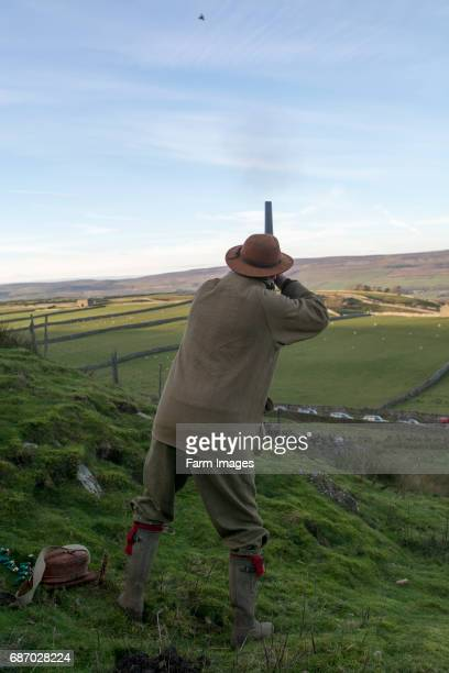 Shooters using 12 bore shotgun on a shoot in the Yorkshire Dales UK