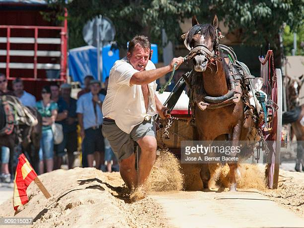 Shooting contest and drag with horses and carts loaded with sand at parties Xativa in , Spain.