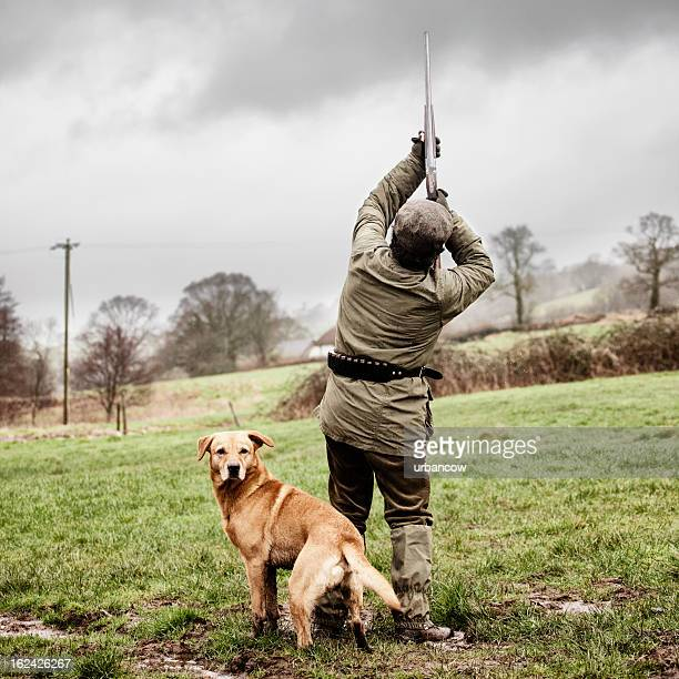 shooting pheasant, with dog - hunting stock pictures, royalty-free photos & images