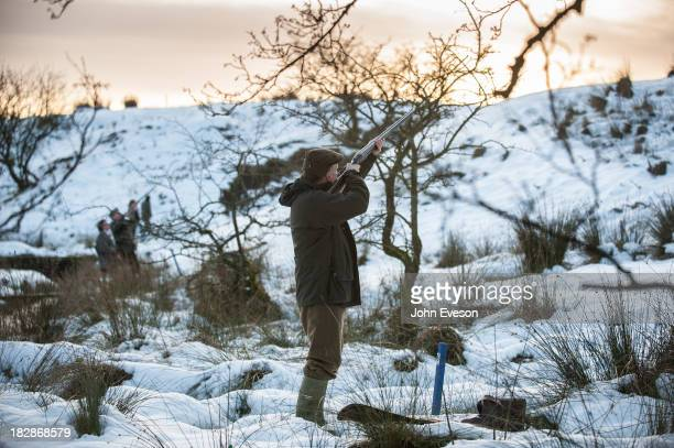 Shooting pheasants in the snow.