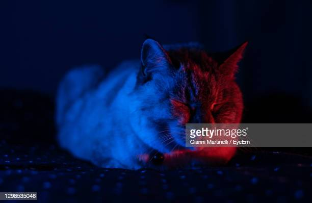 shooting, red and blue light - martinelli stock pictures, royalty-free photos & images